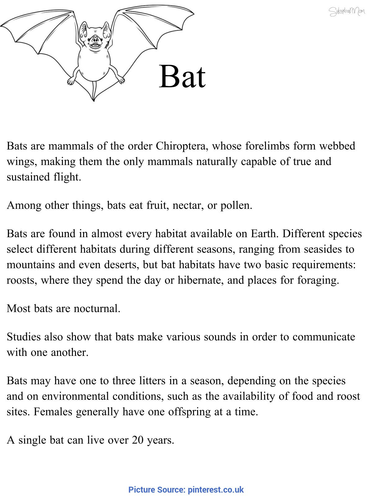 2nd Grade Habitat Worksheets Bat Habitat Science Natural Science Interactive 1st