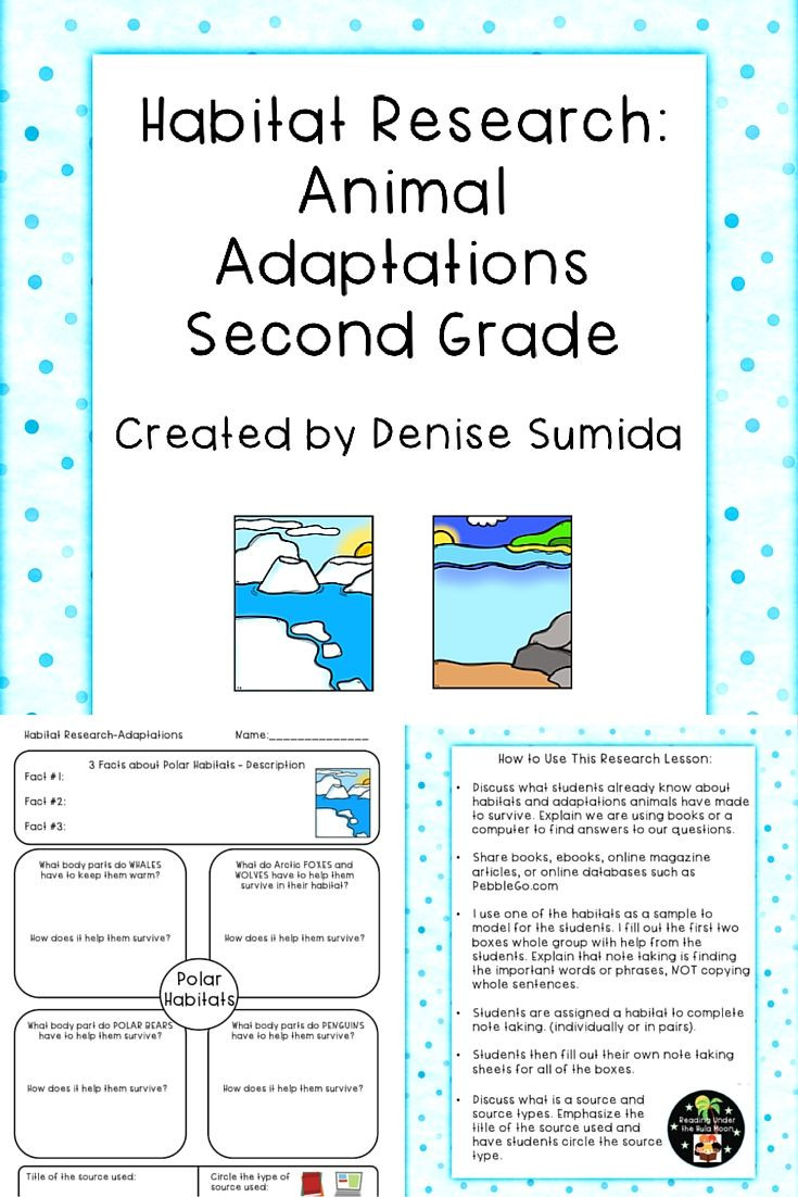 2nd Grade Habitat Worksheets Habitat Research Animal Adaptations Second Grade