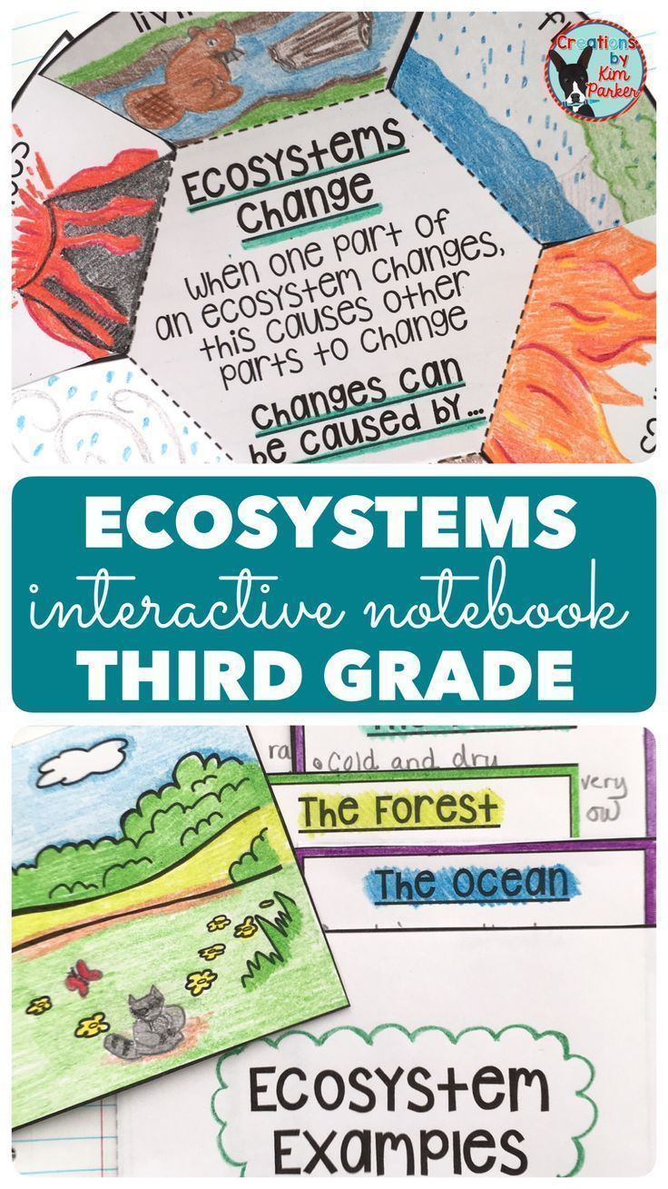 3rd Grade Ecosystem Worksheets Ecosystems Science Interactive Notebook Grade 3
