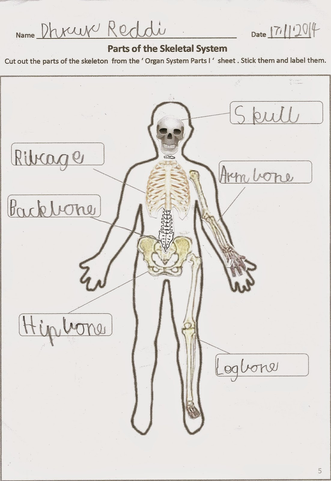 3rd Grade Human Body Worksheets Happy Learners 2014