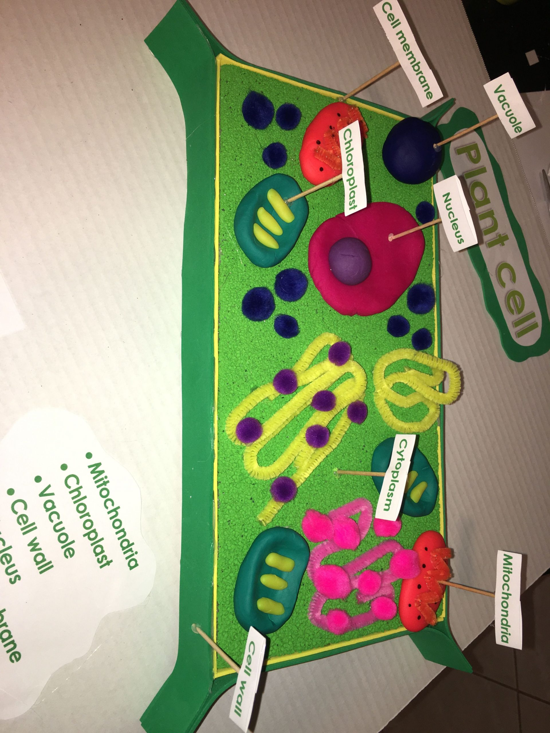 5th Grade Cell Worksheets 5th Grade 3d Plant Cell Model
