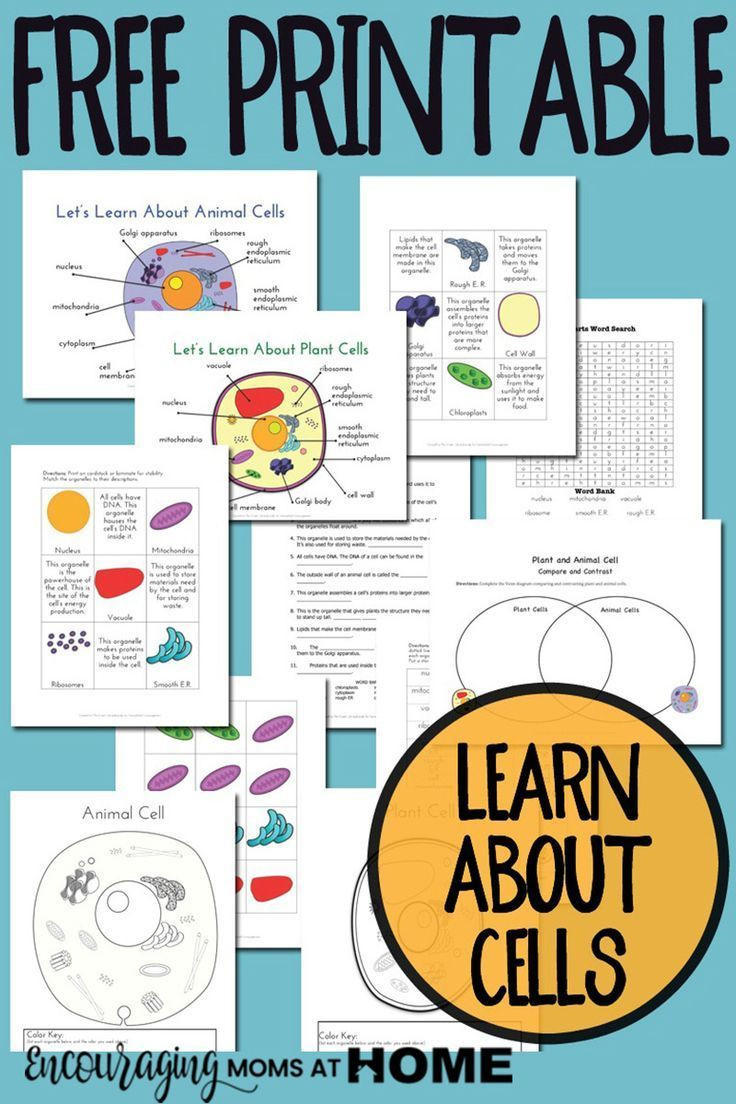 5th Grade Cell Worksheets Plant and Animal Cell Printables Grades 4 6