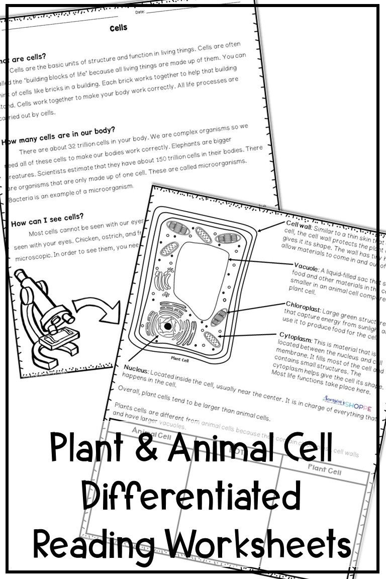 Plant and Animal Cells Differentiated Reading Activity