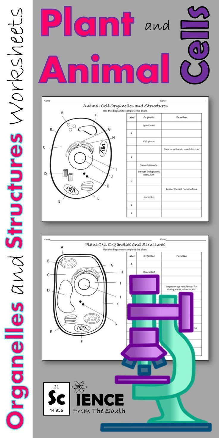 5th Grade Cell Worksheets Plant and Animal Cells Worksheets for Middle and High School