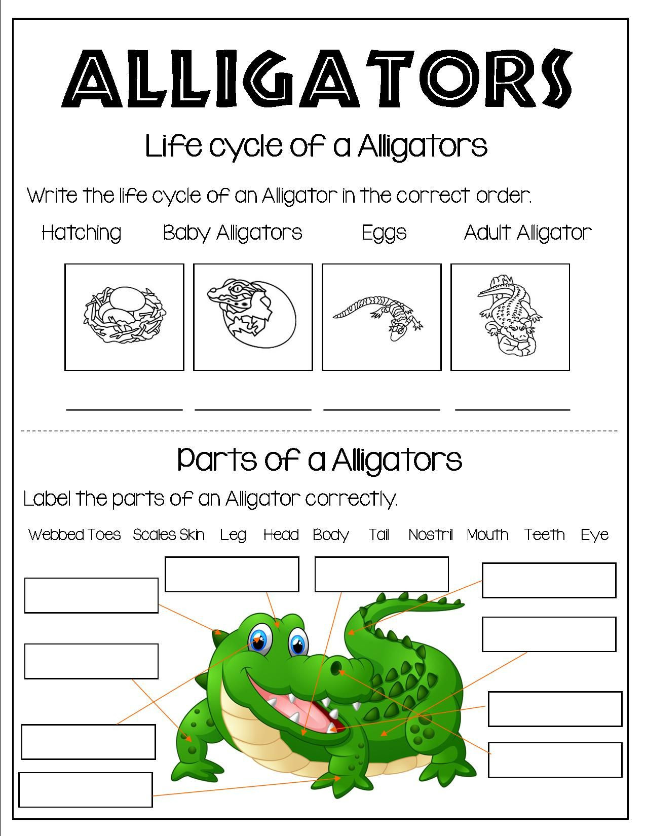 Amphibian Worksheets for Second Grade Grade 1 and Grade 2 Students Can Learn About Reptiles All