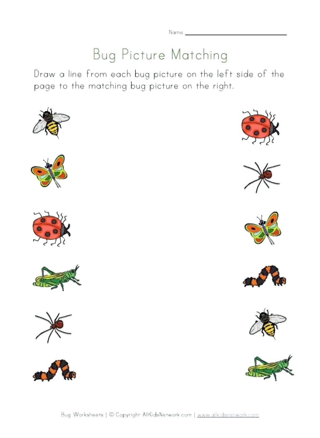 Bug Worksheets for Preschool Bugs Worksheets for Preschool Clover Hatunisi