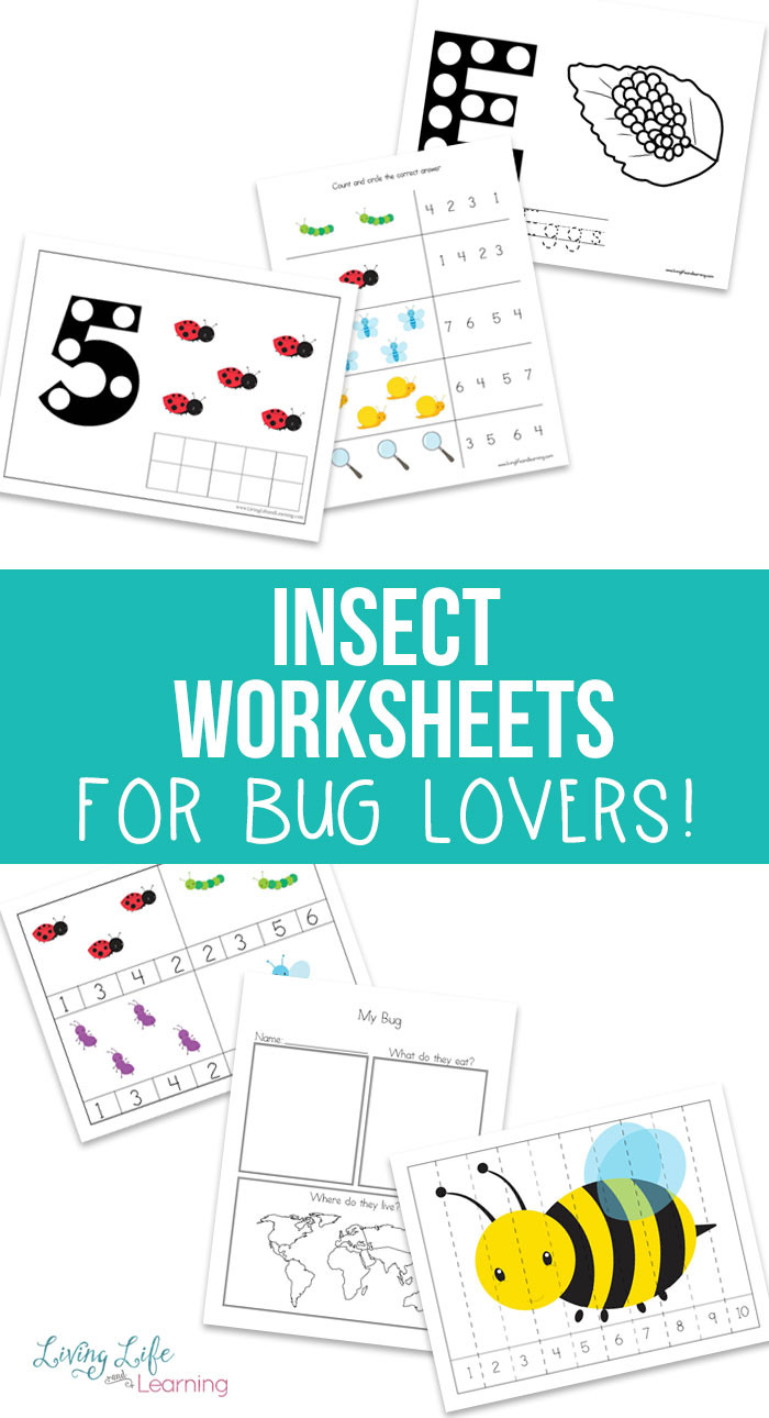 Bug Worksheets for Preschool Free Insect Worksheets for Kids