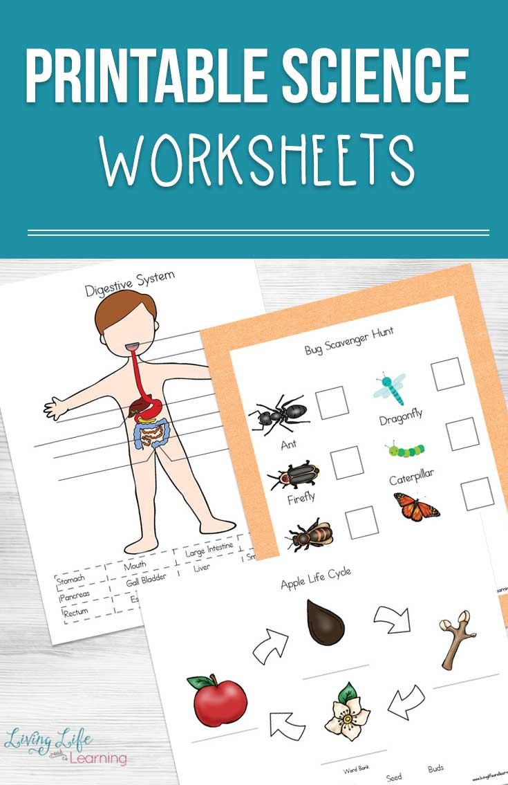 Bug Worksheets for Preschool Printable Science Worksheets for Kids
