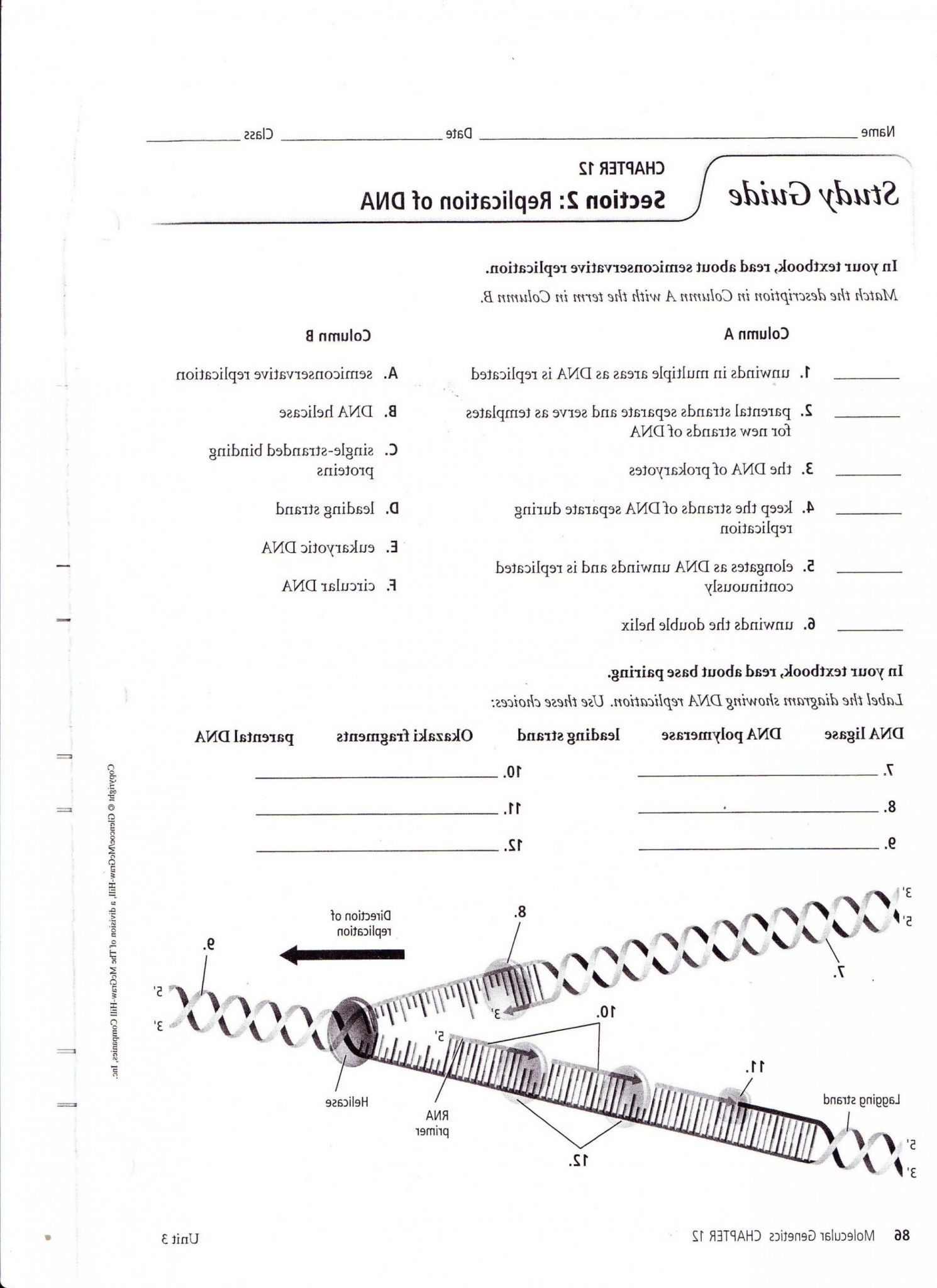 Dna Worksheet Middle School Pdf Dna Worksheet Kids