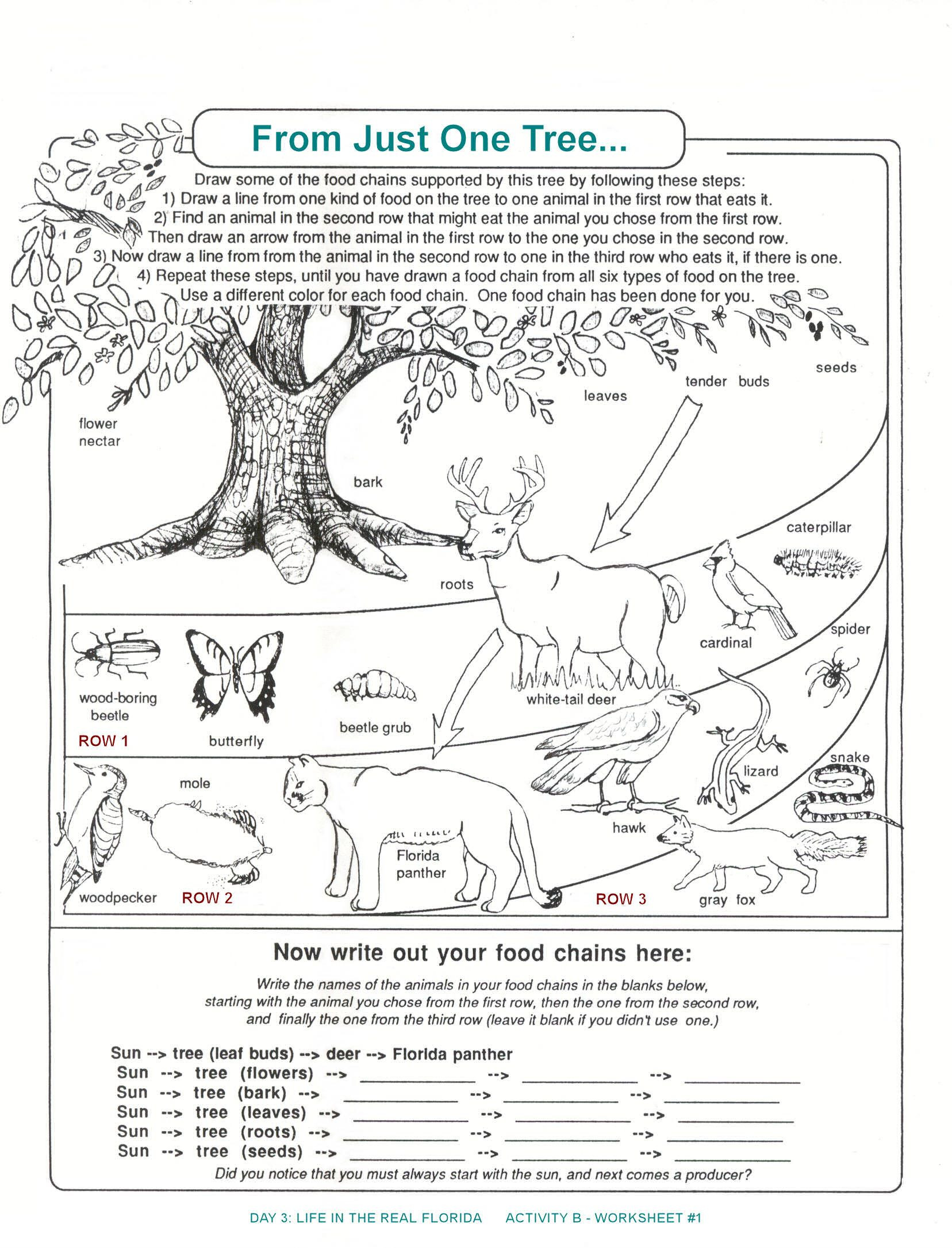 Ecosystem Worksheets 4th Grade Student Activity Sheet Food Web Yahoo Search Results
