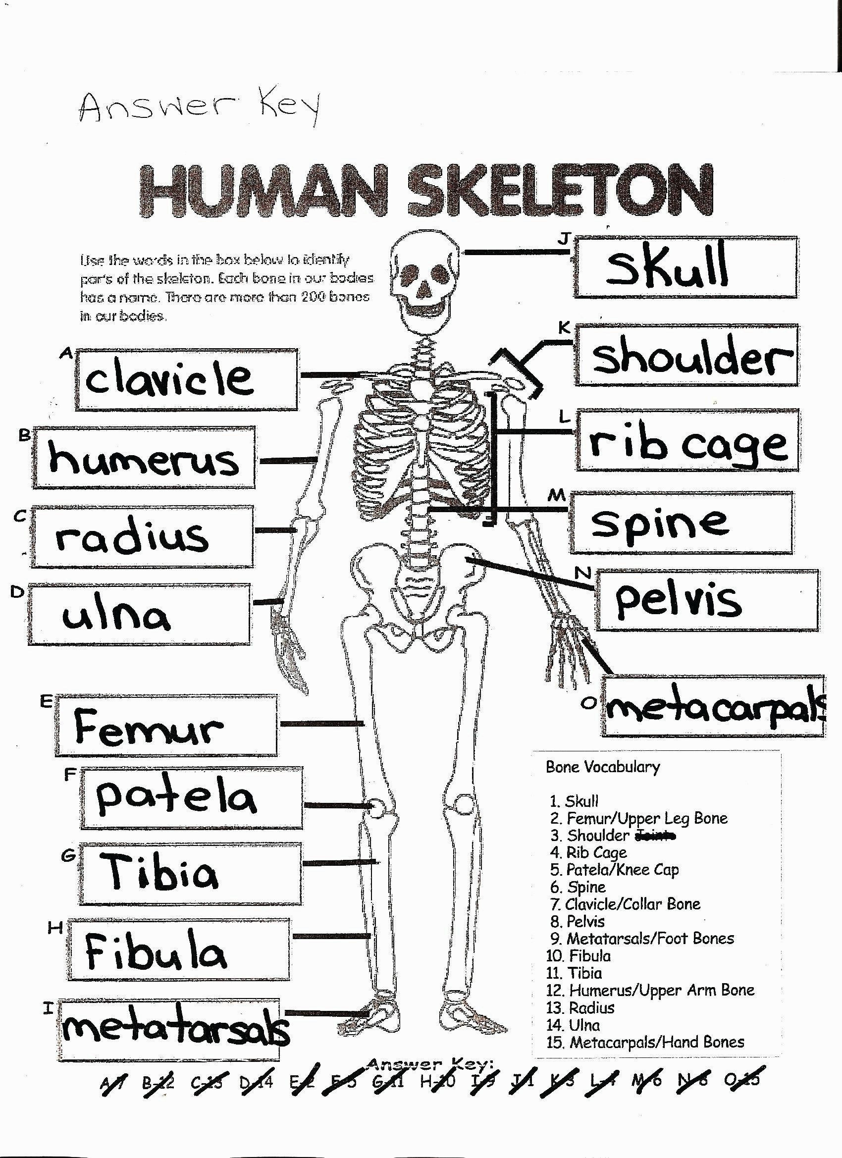 Free Printable Human Anatomy Worksheets Anatomy Coloring Pages Coloring Page Free Printable Human
