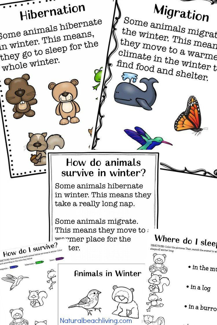 Hibernation Worksheet for Preschool Pin On Printable Example Worksheet for Preschool