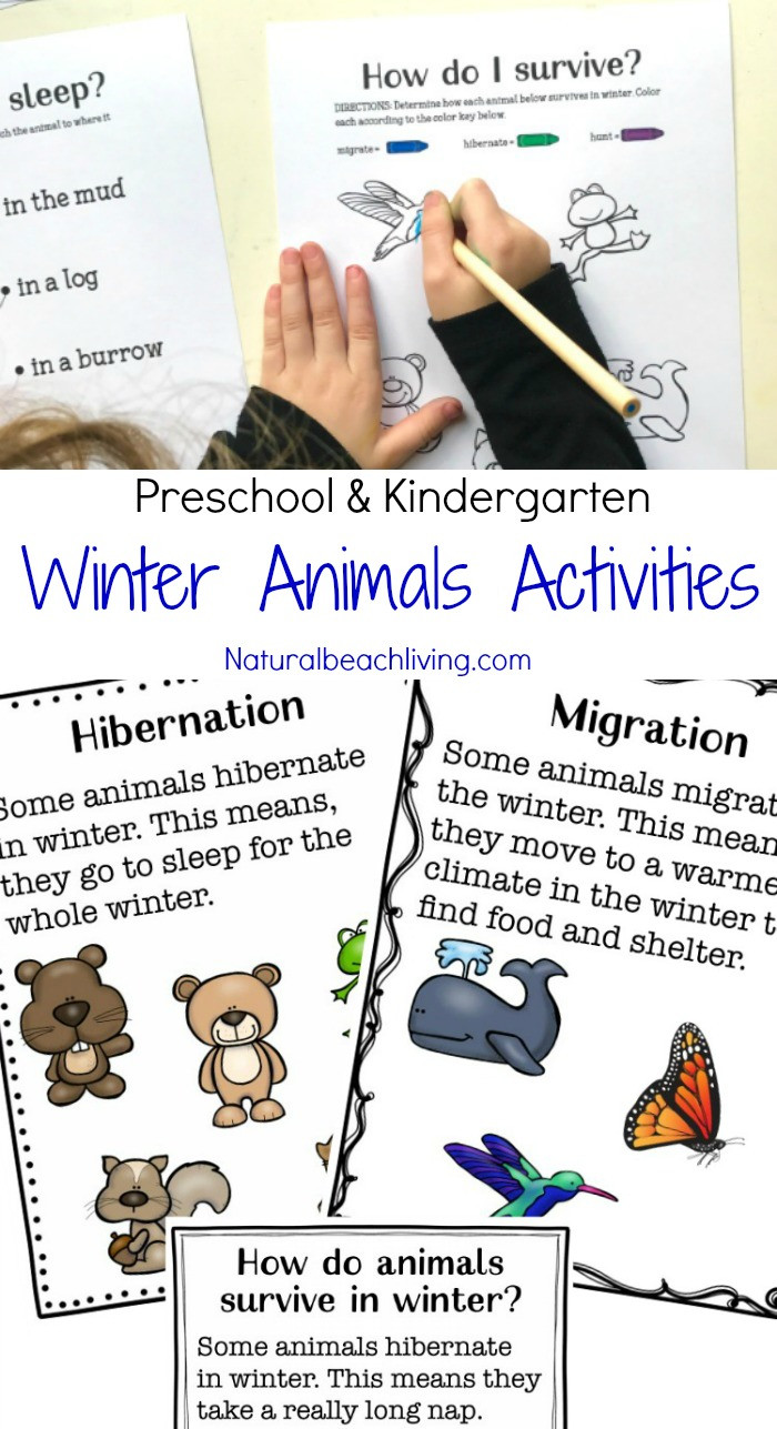 Hibernation Worksheets for Preschool Winter Animals for Preschool Activities Natural Beach Living