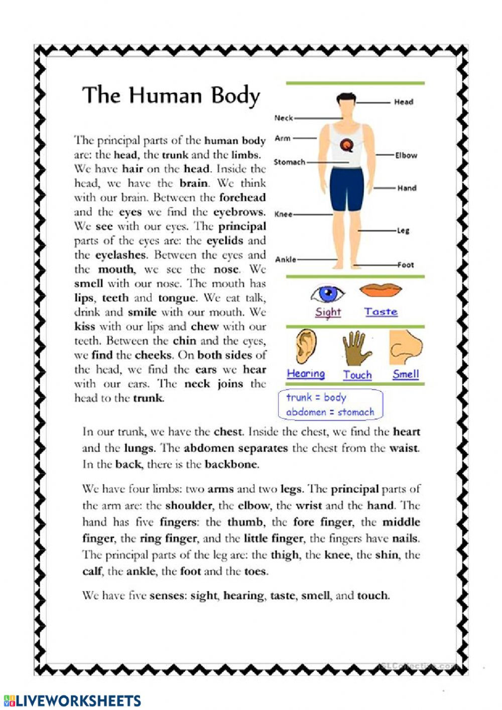 Human Body Worksheets Middle School Body Parts Interactive Worksheet