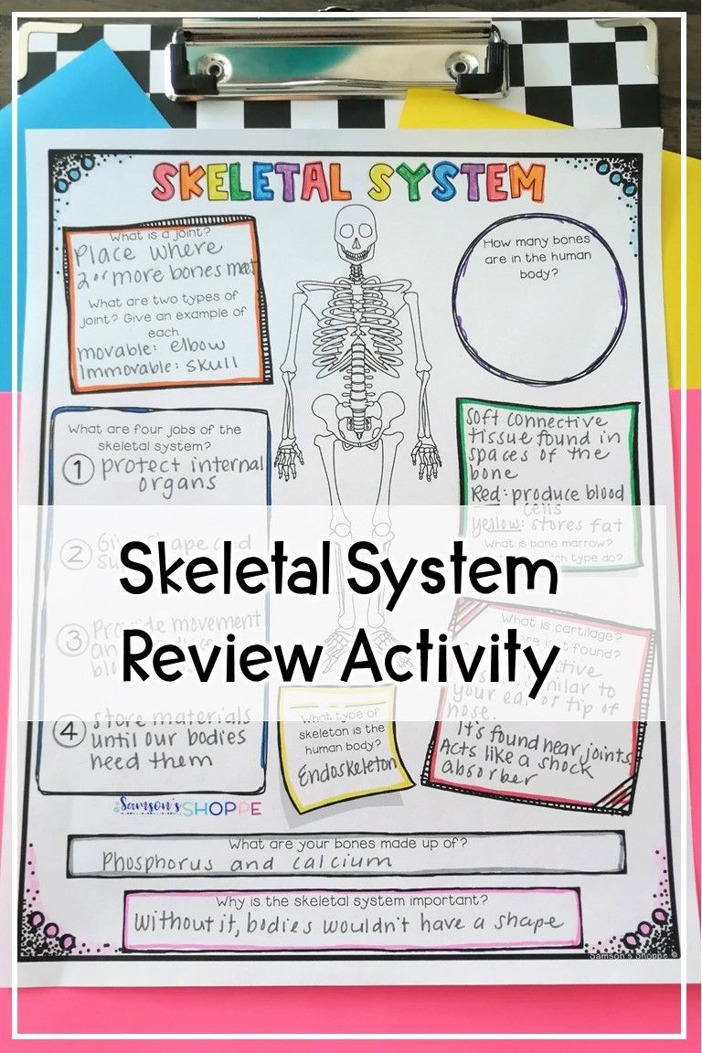 Human Body Worksheets Middle School Human Body Skeletal System Activities for Kids In Elementary
