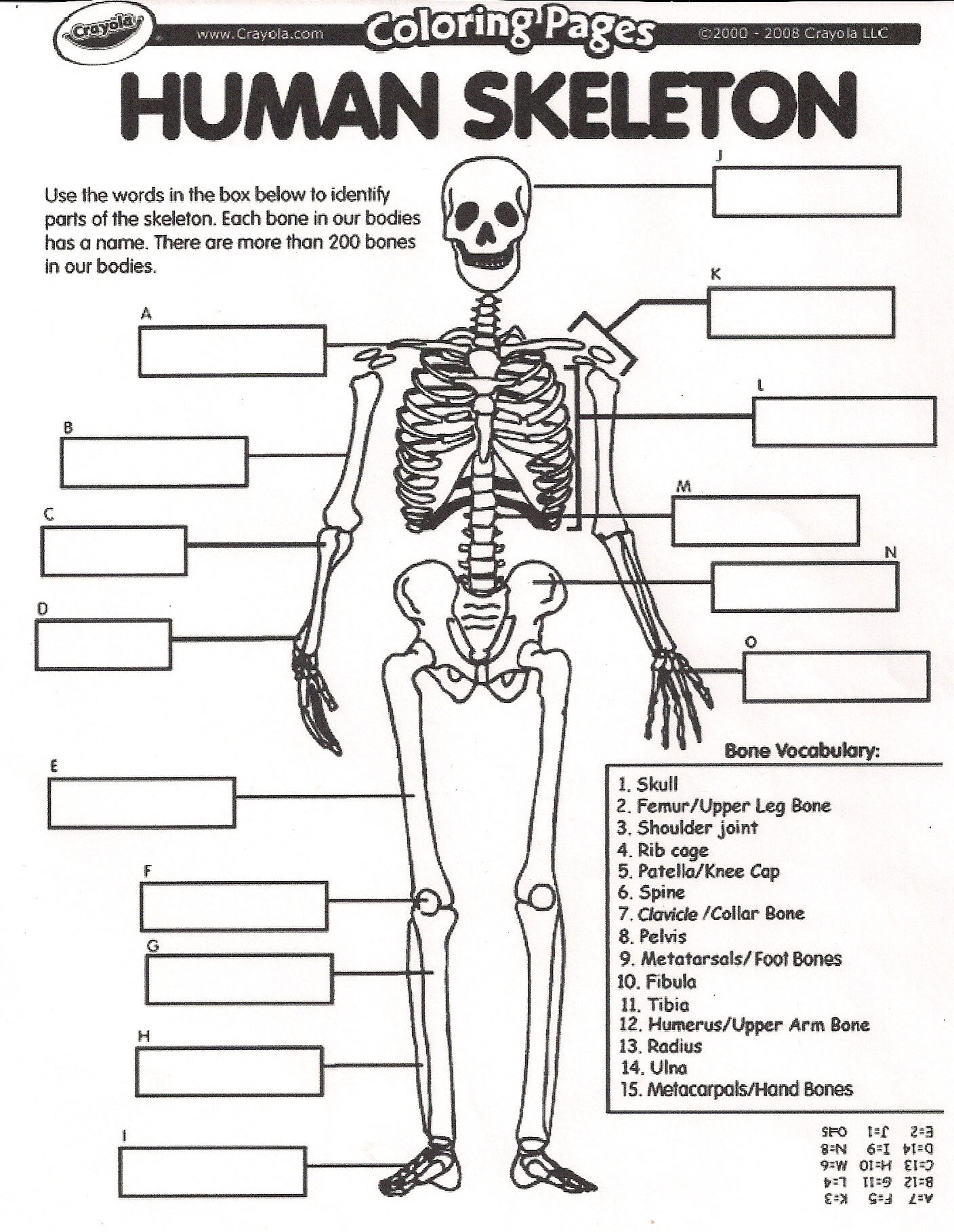 Human Body Worksheets Middle School Javier Christopher Intro to Anatomy