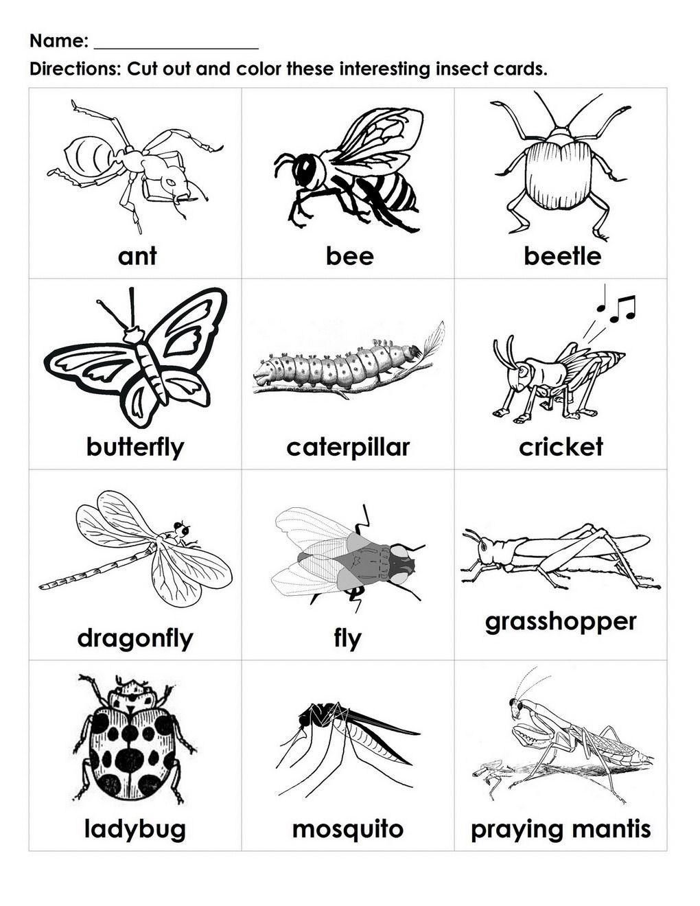 Insect Worksheets for Preschoolers Bugs for Kids to Color