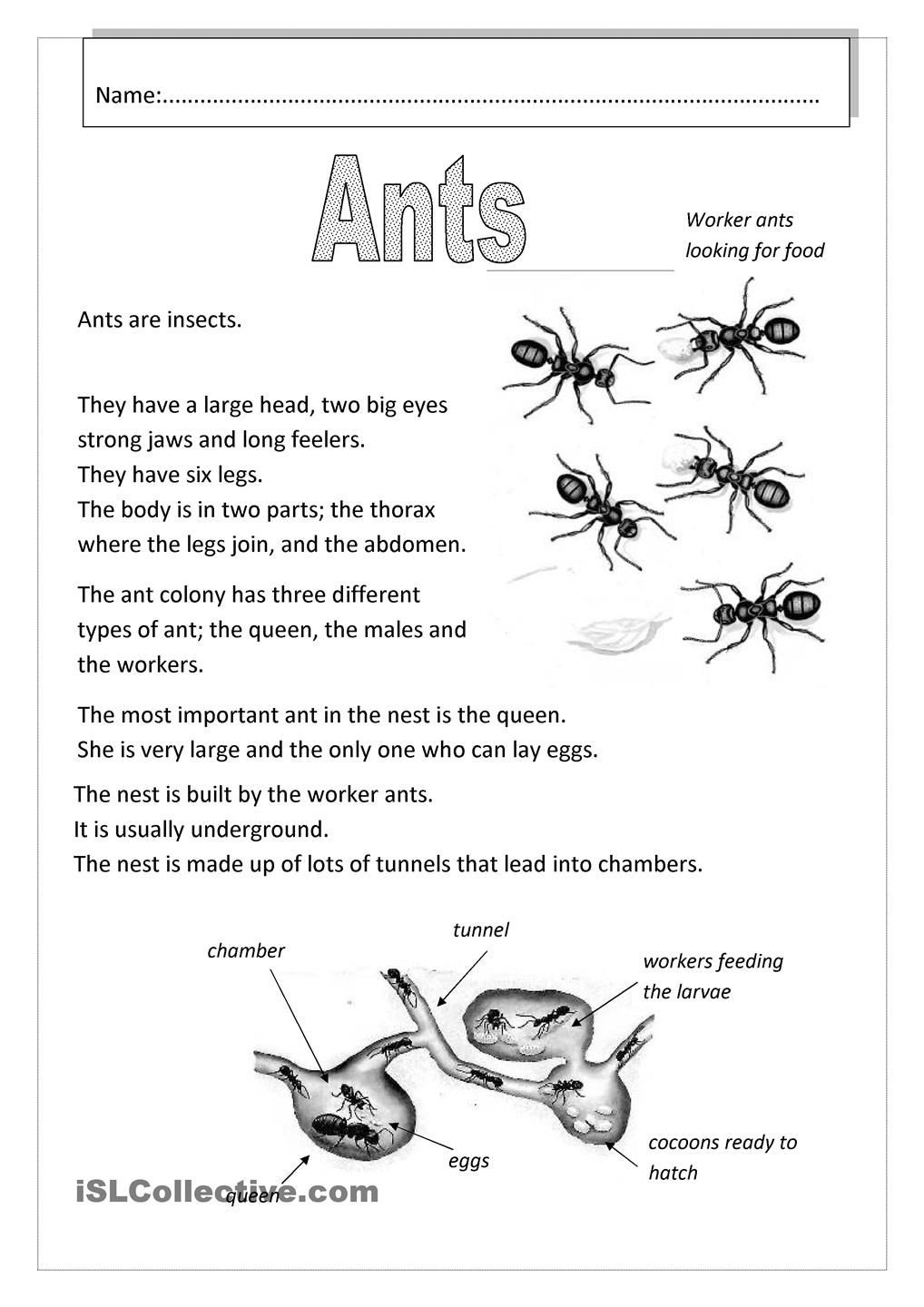 Insect Worksheets for Preschoolers Pin by Alleyce Pang On Science