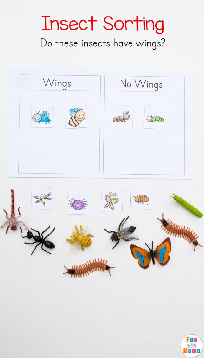 Kindergarten Math sorting Worksheets Preschool Insect theme sorting Worksheet Bug Activities Fun