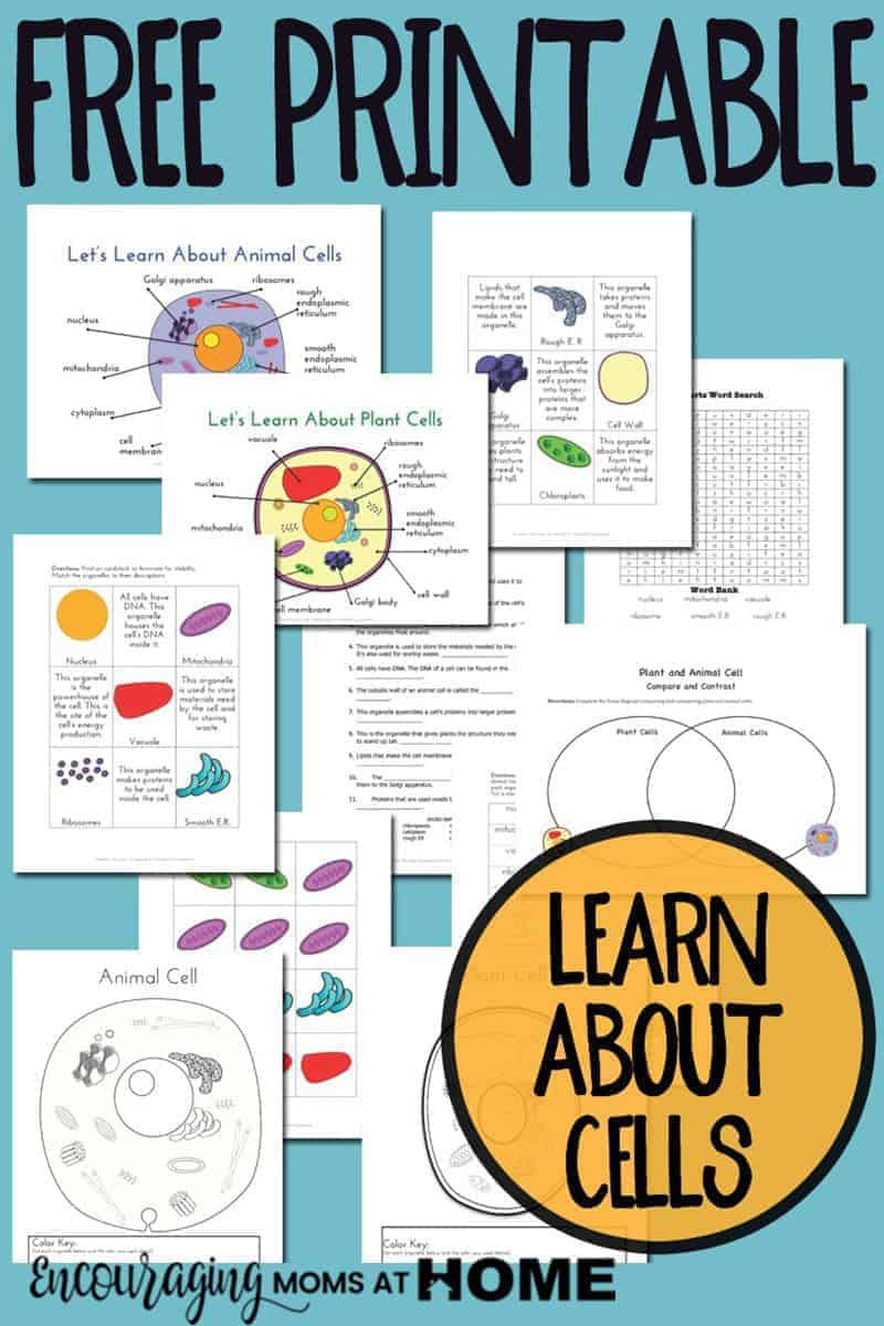 Printable Cell Worksheets Plant and Animal Cell Printables Grades 4 6