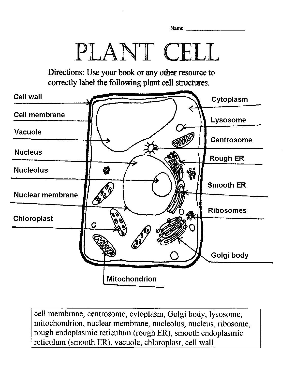 Printable Cell Worksheets Plant Cell Worksheets Answers