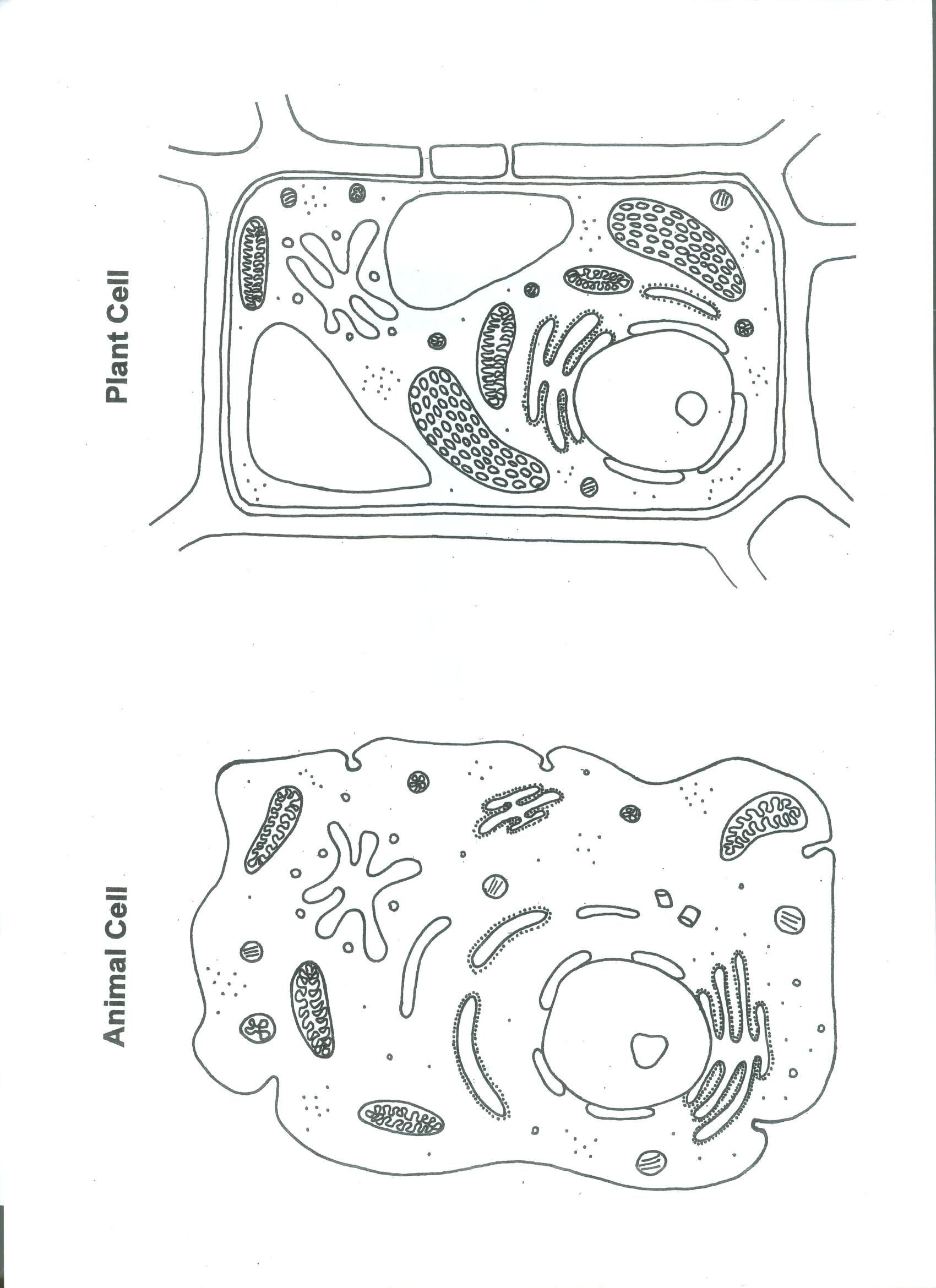Printable Cell Worksheets Shrinky Plant and Animal Cell Science Cells