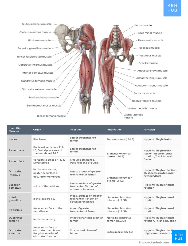 Printable Muscle Diagram Muscle Anatomy Reference Charts Free Pdf