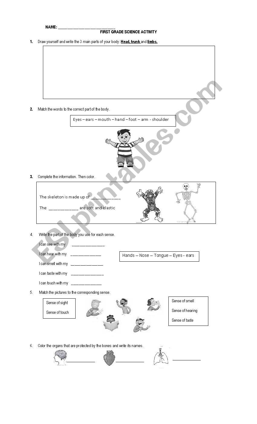 Science Worksheet 1st Grade First Grade Science Worksheet Esl by Anpamaji Worksheets