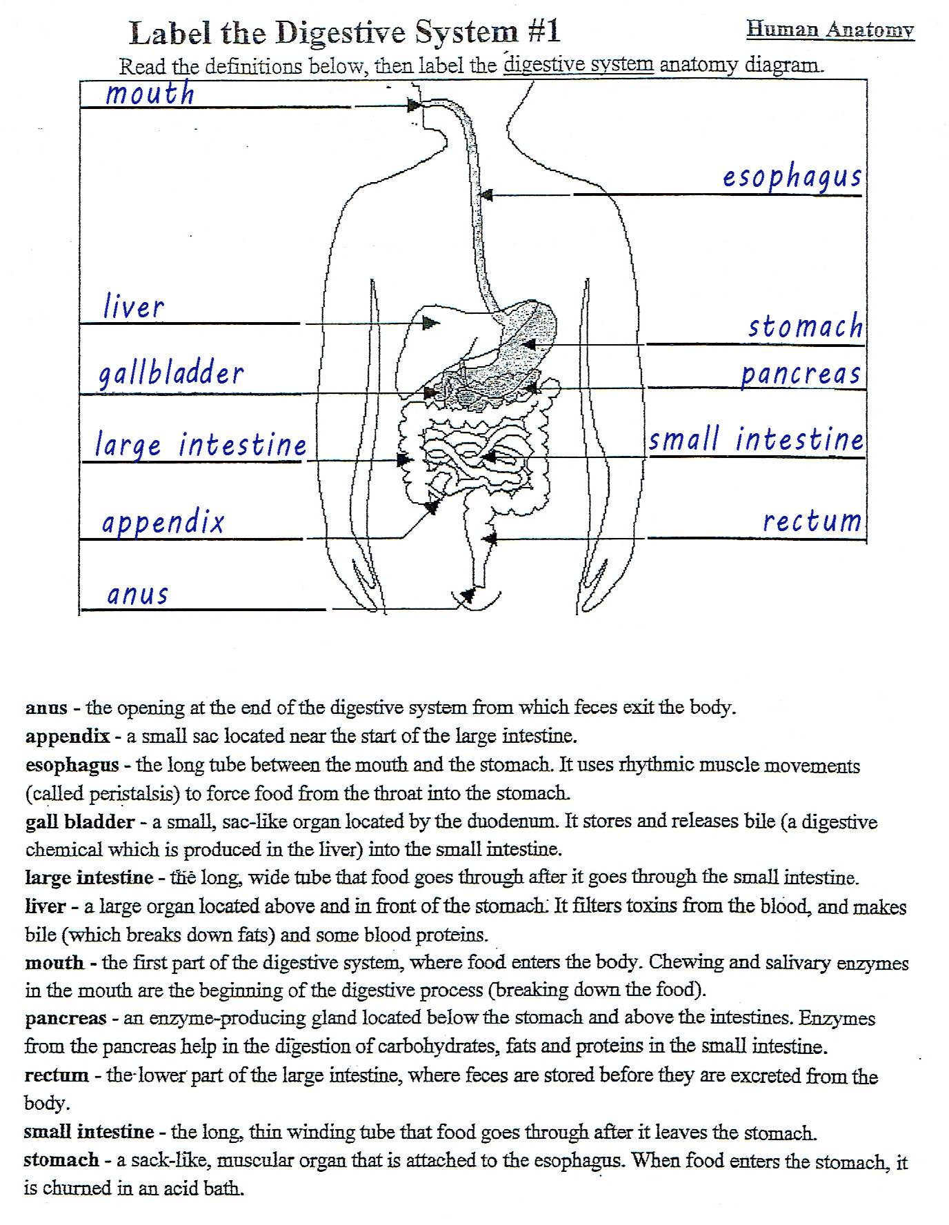 Digestive System Worksheets Middle School 34 Label the Digestive System Worksheet Answers Labels