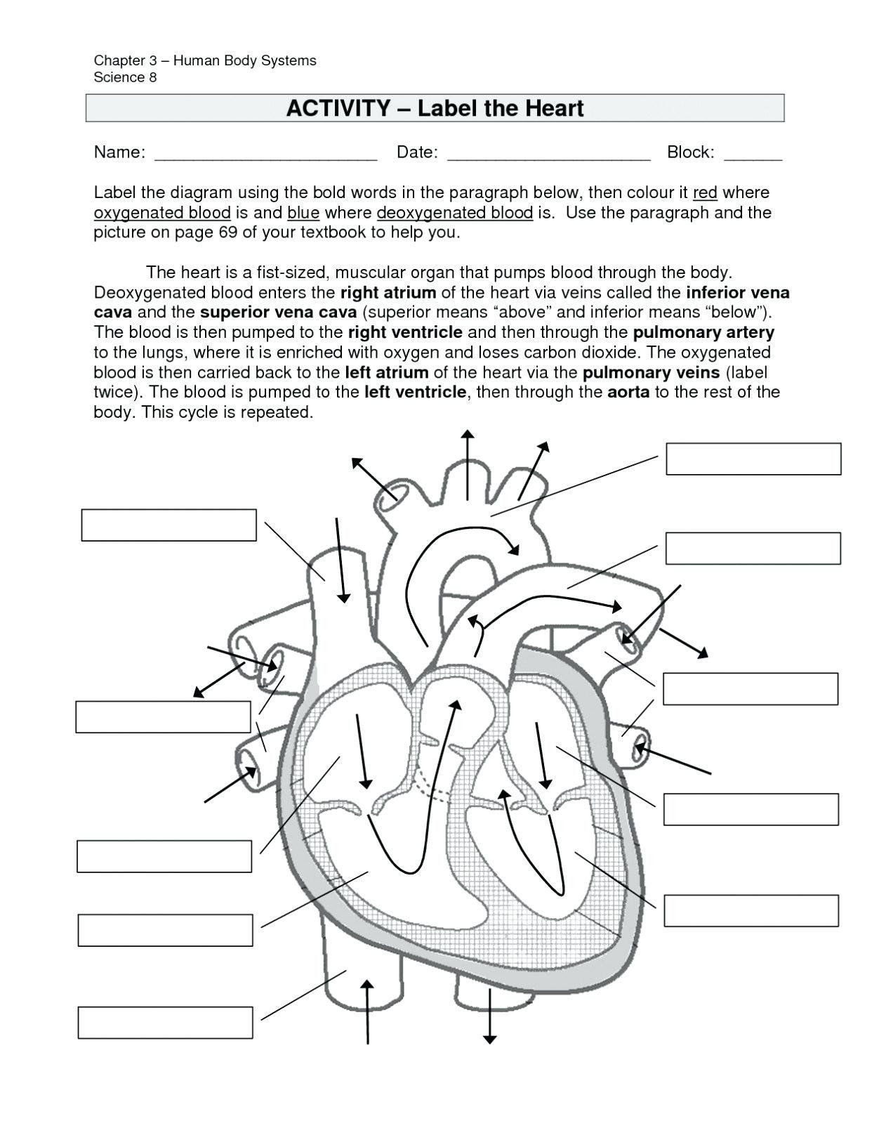 Digestive System Worksheets Middle School Pin On Printable Blank Worksheet Template