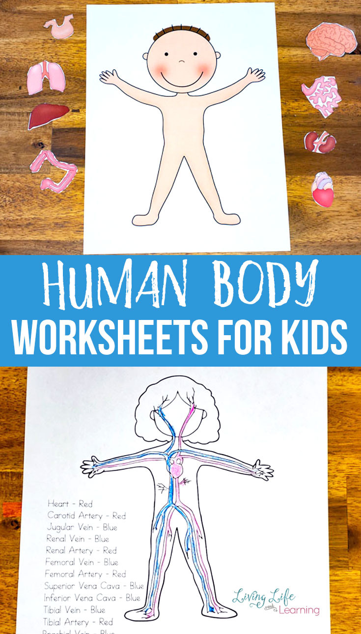 Free Printable Anatomy Worksheets Human Body Worksheets for Kids