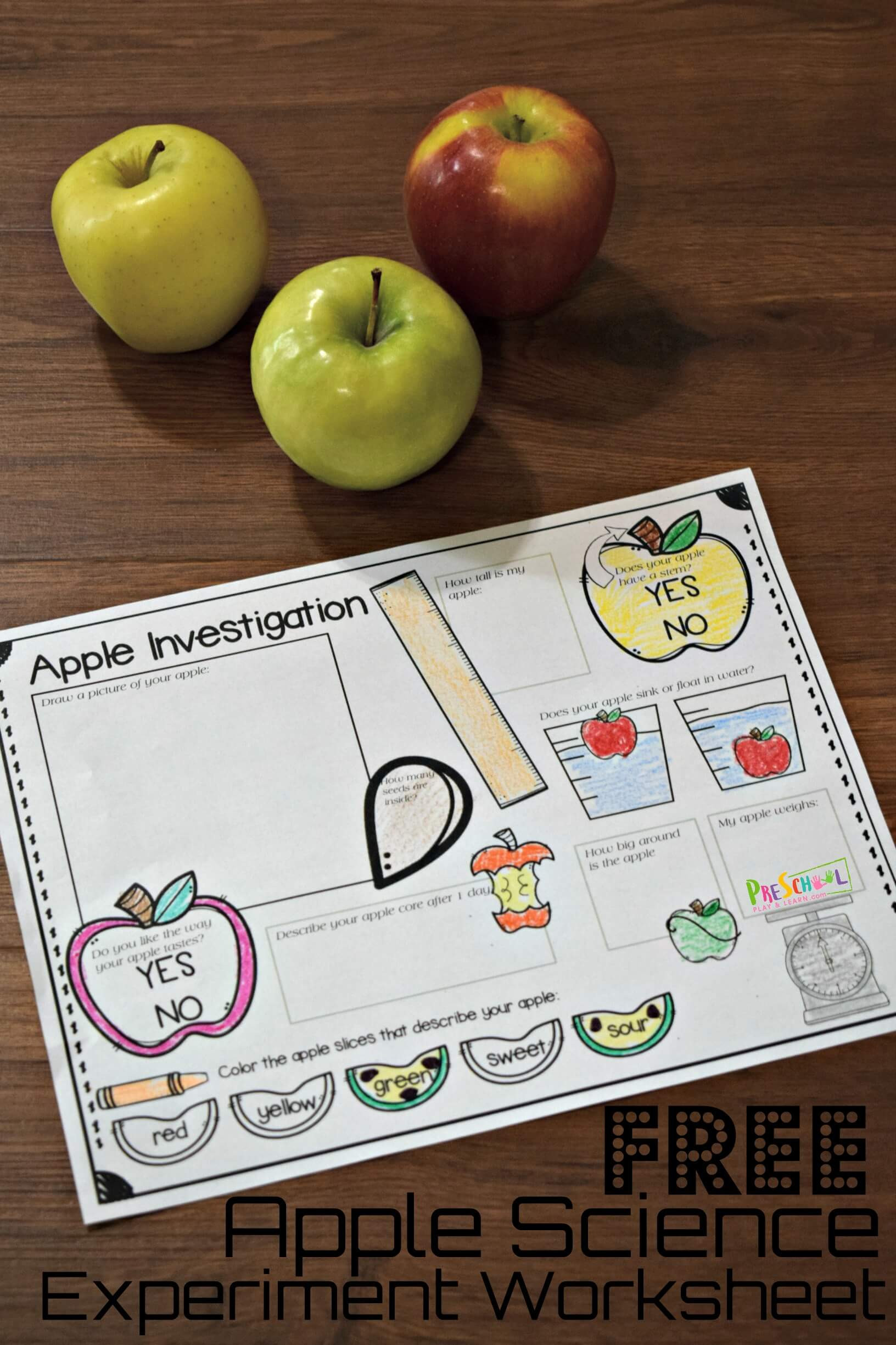 Free Printable Apple Worksheets Free Apple Science Experiment Worksheet
