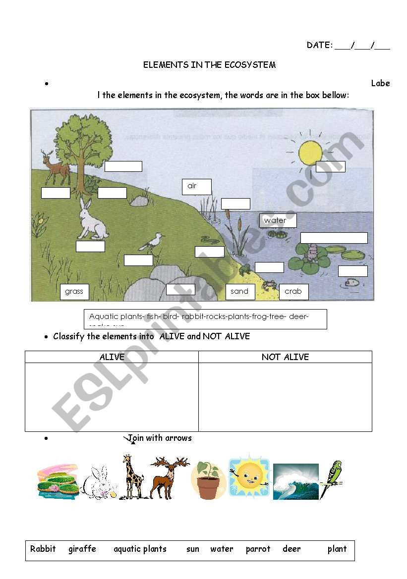 Free Printable Ecosystem Worksheets Elements In the Ecosystem Esl Worksheet by Carucha