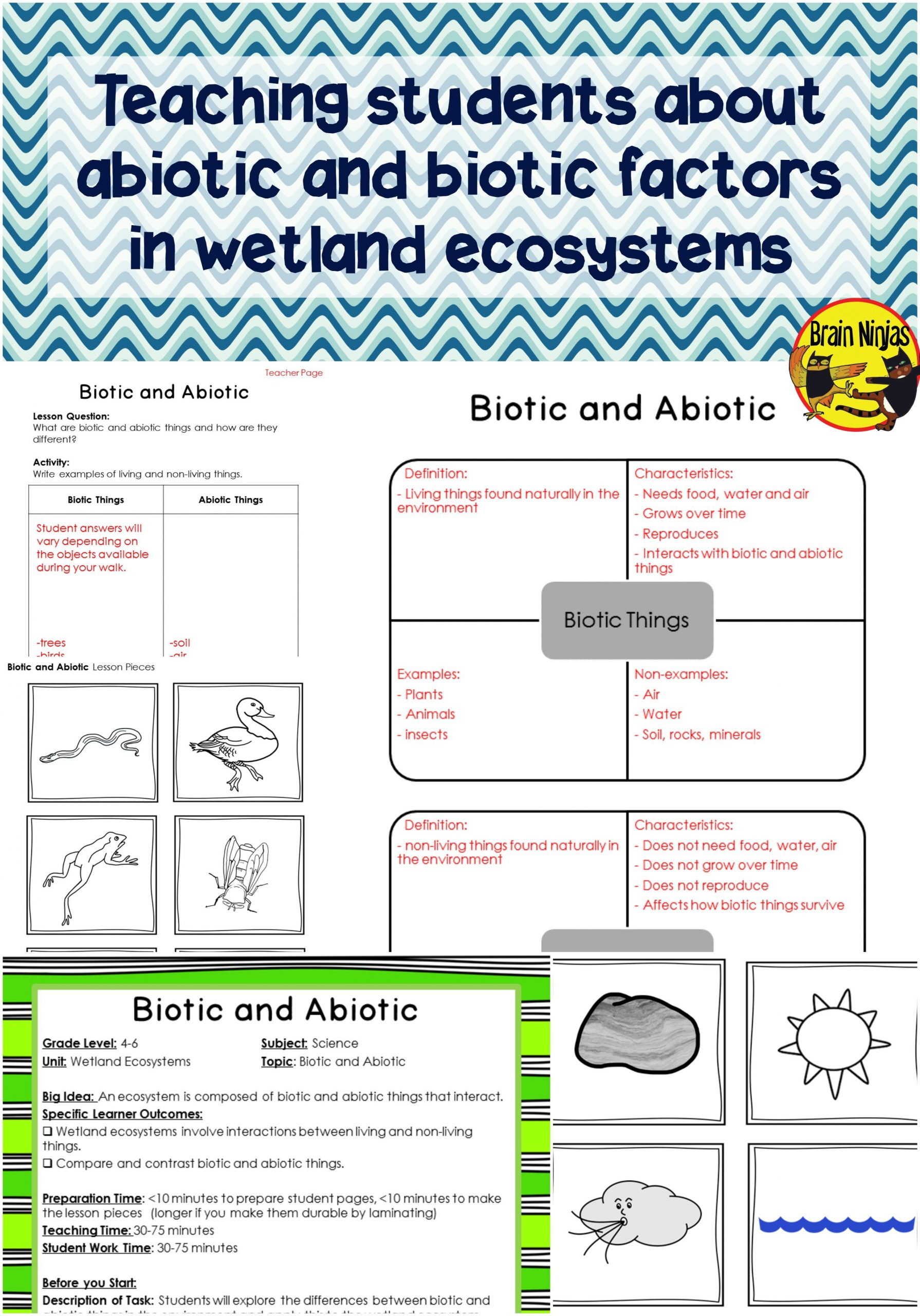 Free Printable Ecosystem Worksheets Food Chain Worksheets 7th Grade