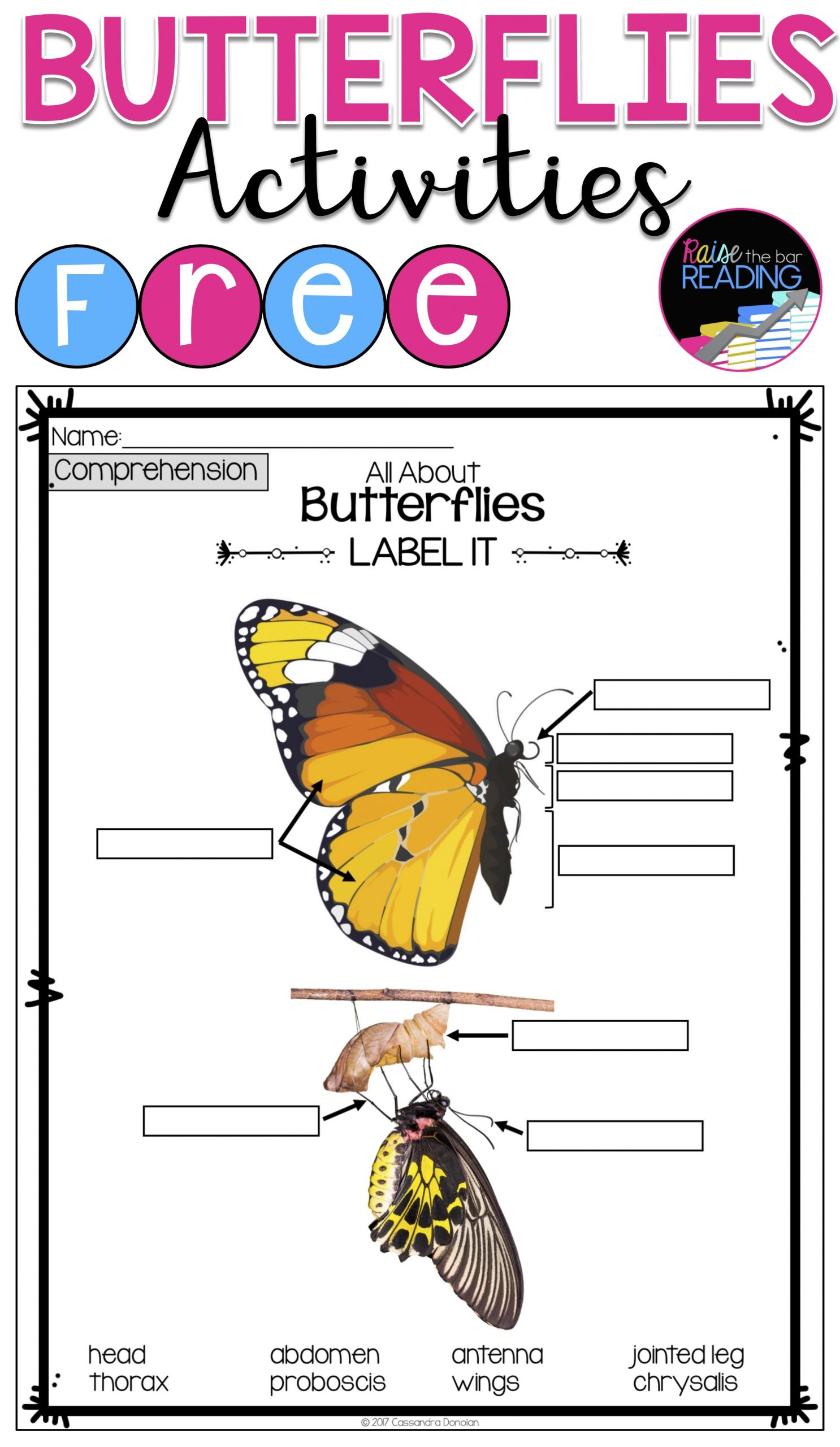 Insect Worksheets for First Grade Free butterflies Activities Insects Unit or Informational