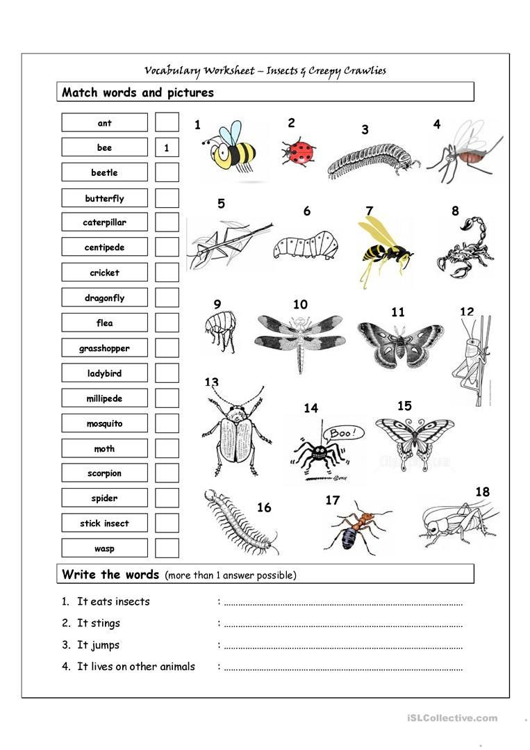 Insect Worksheets for First Grade Vocabulary Matching Worksheet Insects Worksheet Free Esl