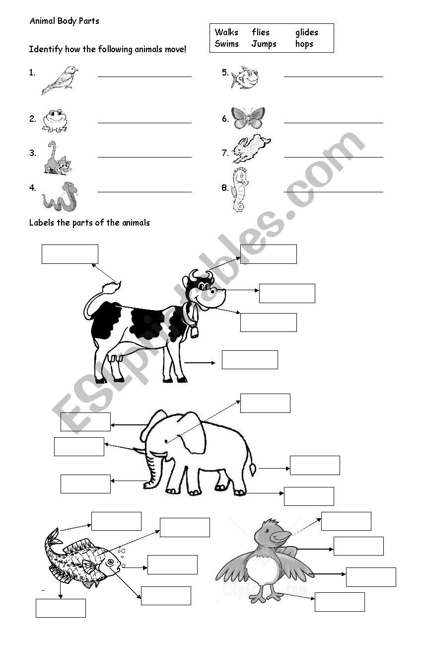Mammals Worksheet First Grade Animal Body Parts Esl Worksheet by Ameeyupe Worksheets