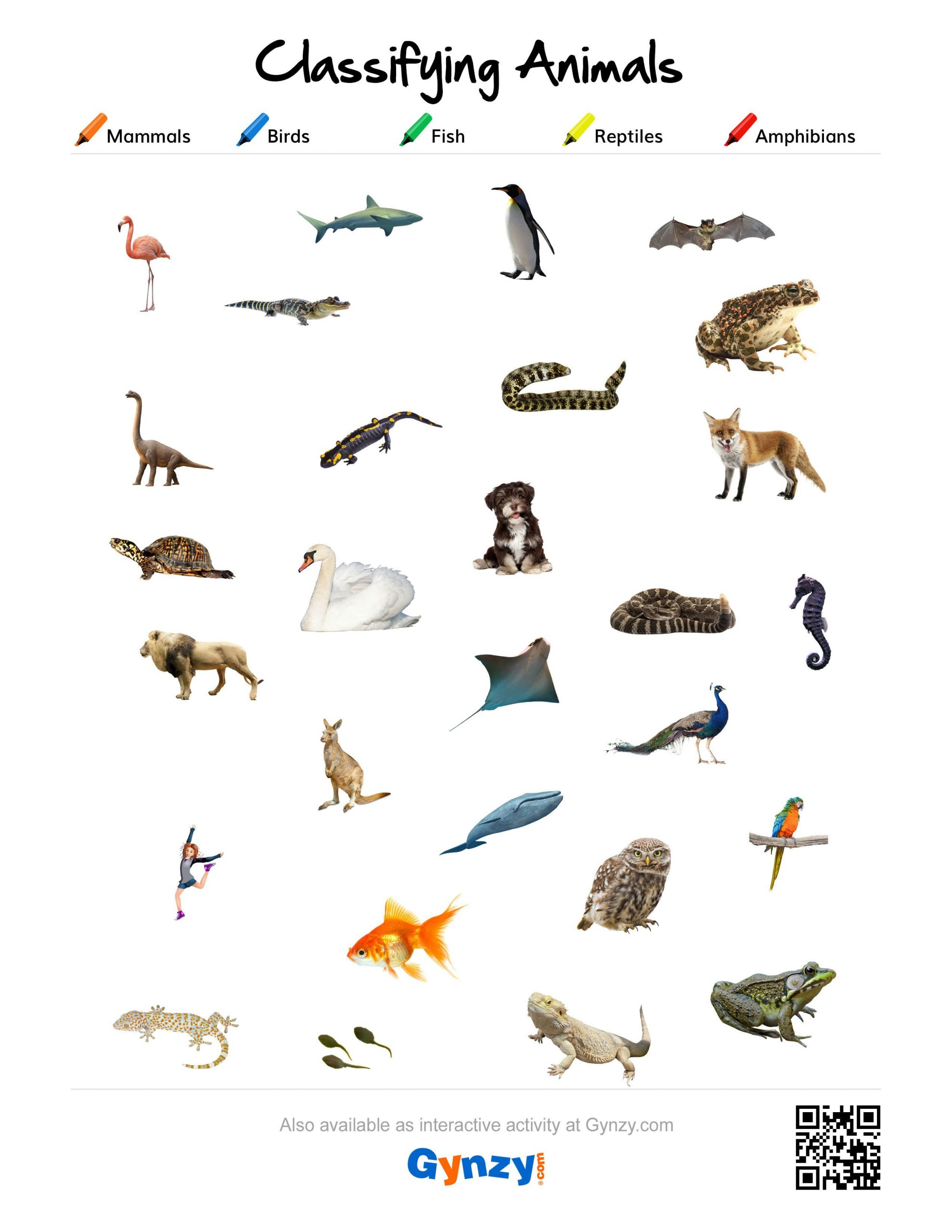 Mammals Worksheets for 2nd Grade Mammals Birds Fish Reptiles or Amphibians [ S R