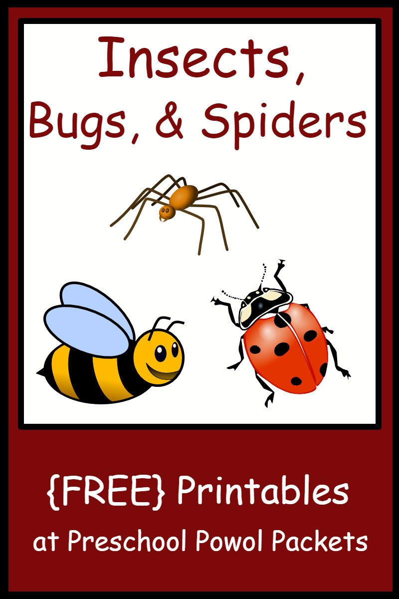 Preschool Bug Worksheets Insect Bug & Spider themed Free Preschool Printables