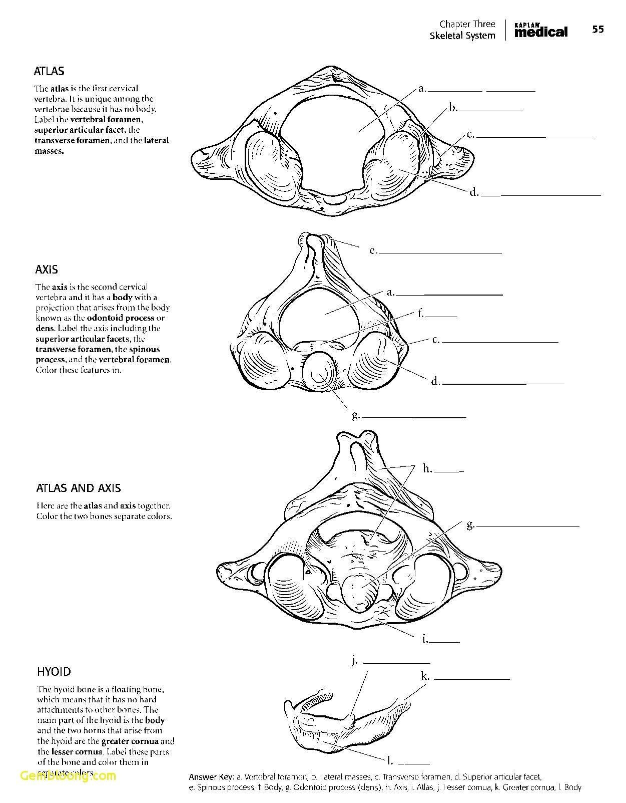 Printable Anatomy Worksheets Free Printableomy Coloring Pages for Adults Easy Worksheets