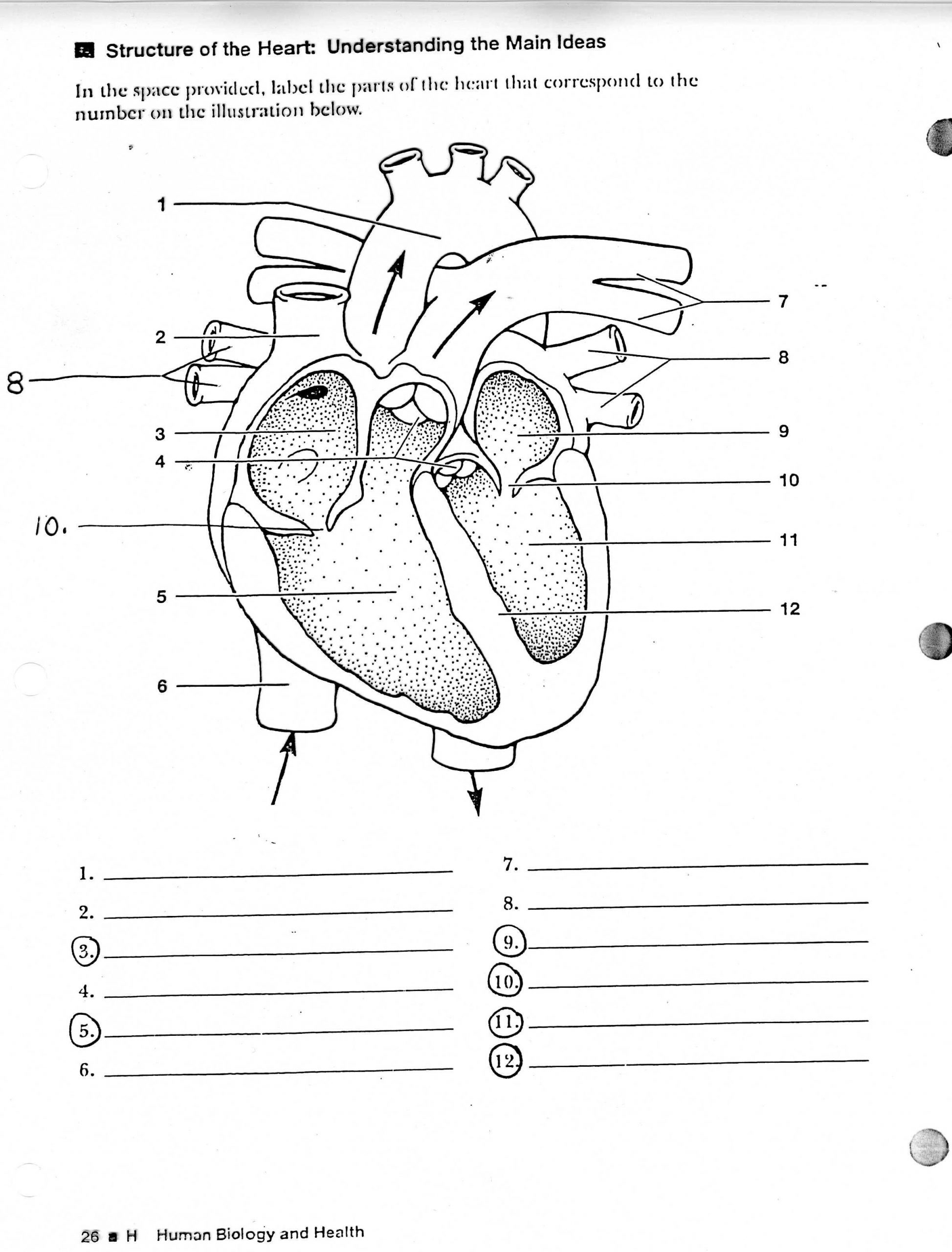 Printable Heart Diagram Blank Human Heart Diagram