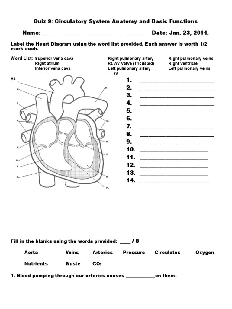 Printable Heart Diagram Heart Diagram Fill In the Blank Human Body Anatomy